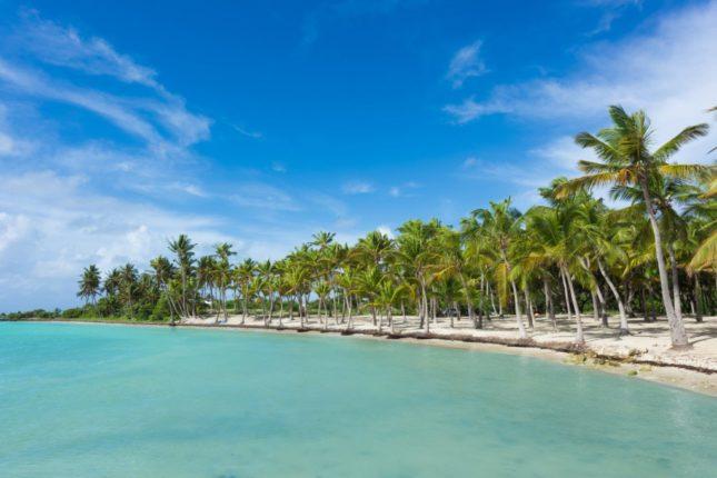 Plage de Guadeloupe Cocotiers
