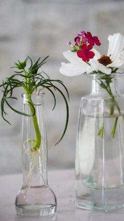 plante hydroculture